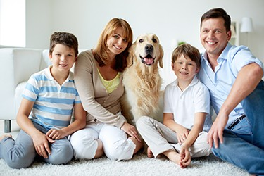 Pets in Divorce?  A look at the Law